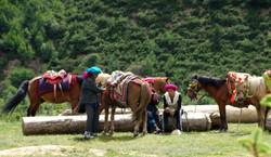 ringha horses