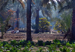 plantation working