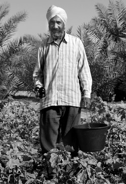 P eggplant man www