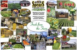 SPEARS FARM