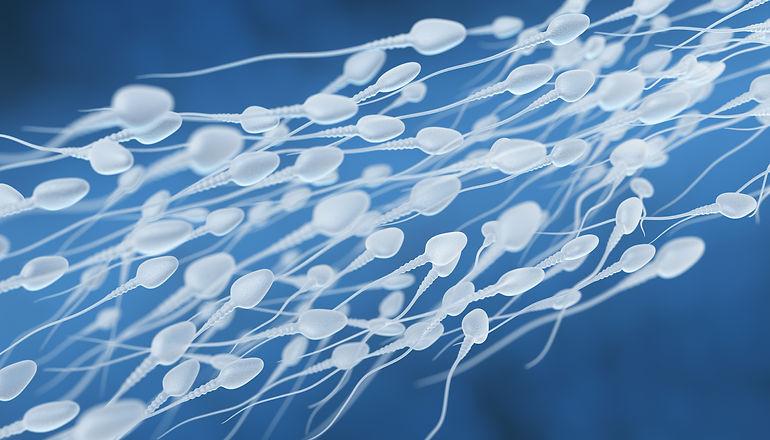 human-sperm-flow-PXAUKUW.jpg