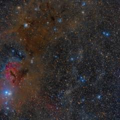 Field NGC 1333 and IC 348