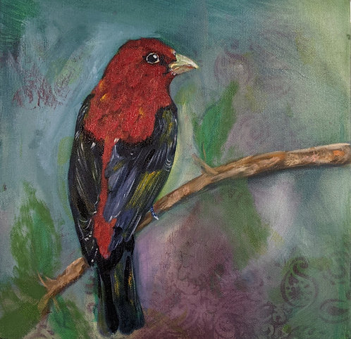 Scarlet -Tanager