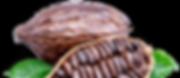 kakaowiec.png