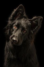 Young happy black dog on black backgroun