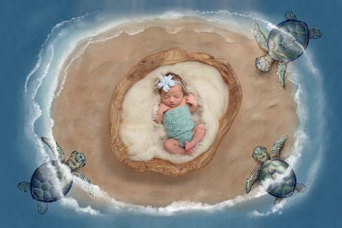 turtlebaby-scaled.jpg