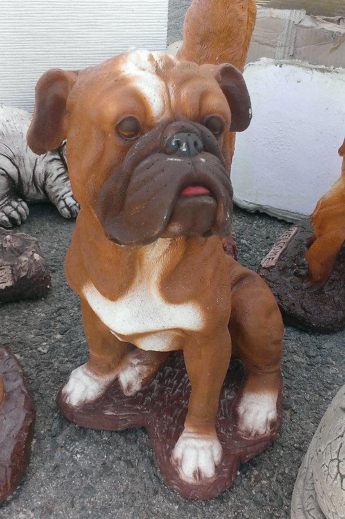 Concrete Boxer Dog
