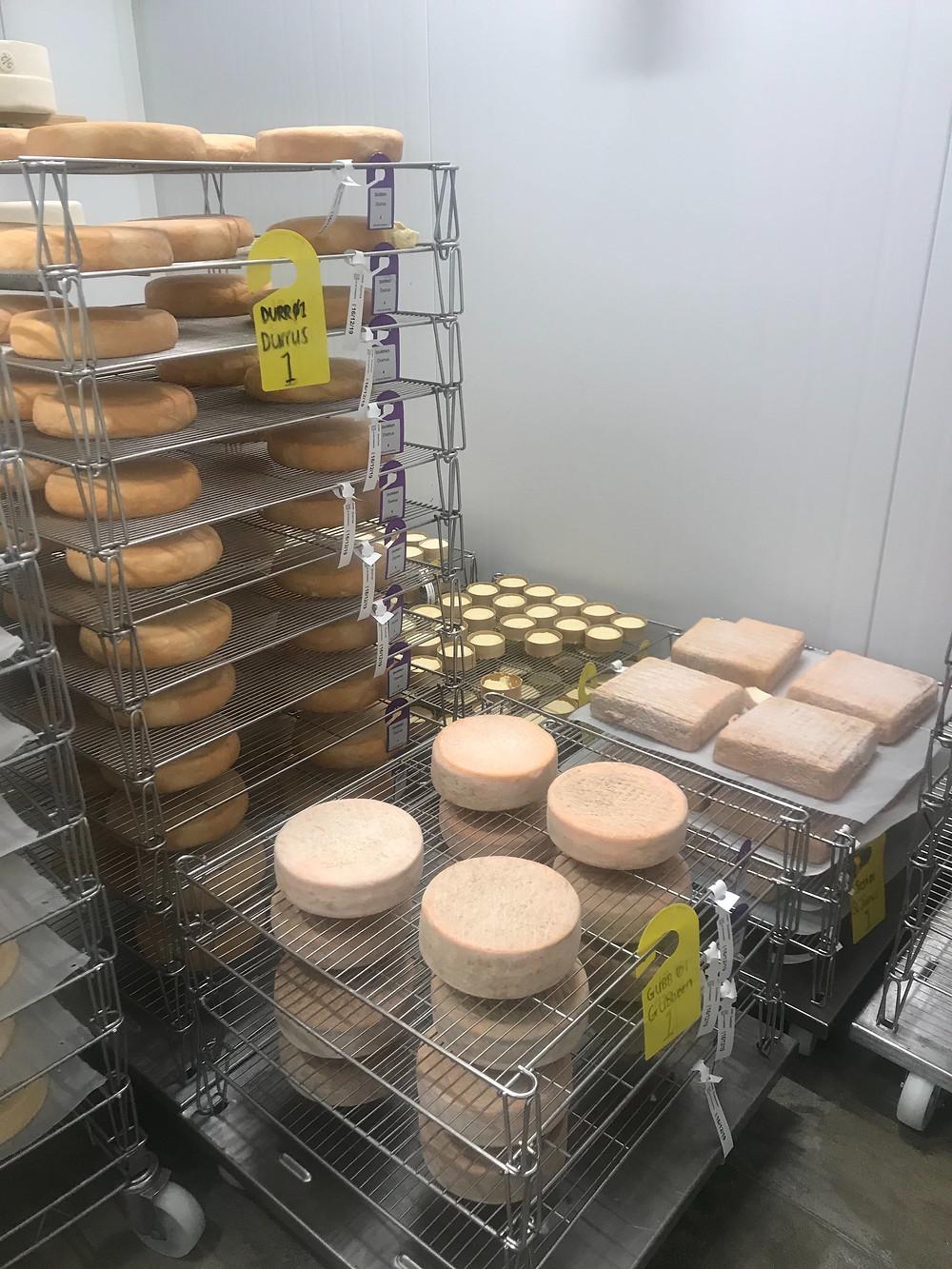 Soft cheeses maturing at Neal's Yard Dairy