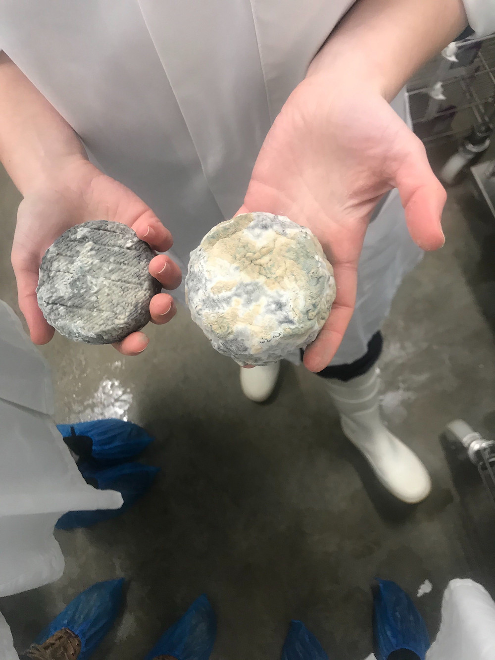 Two pieces of the same cheese at different stages of maturing