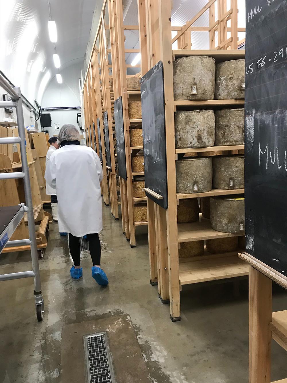 Hard cheeses maturing at Neal's Yard Dairy.