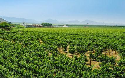 Weingut Queirolo in Ica, Peru.jpg