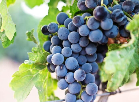 Alles, was Du über chilenischen Wein wissen musst –Weinregionen
