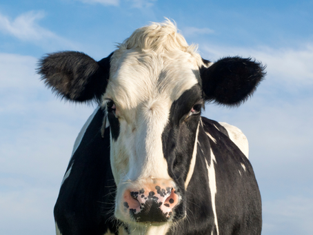 19 Mar - 2 Apr: Cows eating seaweed, turning deserts green & thinking yourself younger...