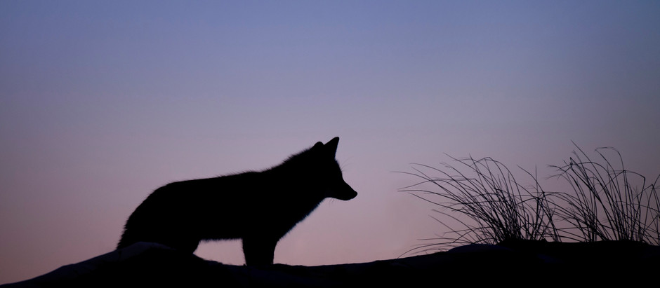 How to Succeed as a Lone Wolf