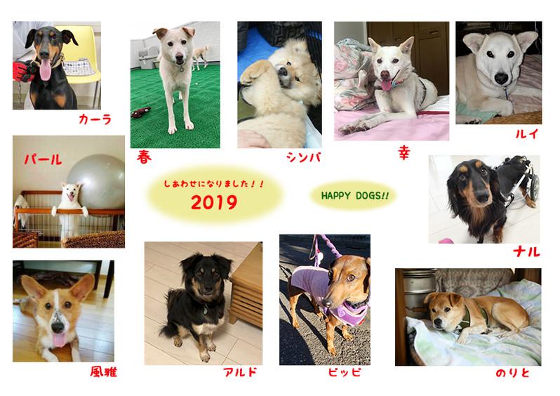 Thankyou2019dog
