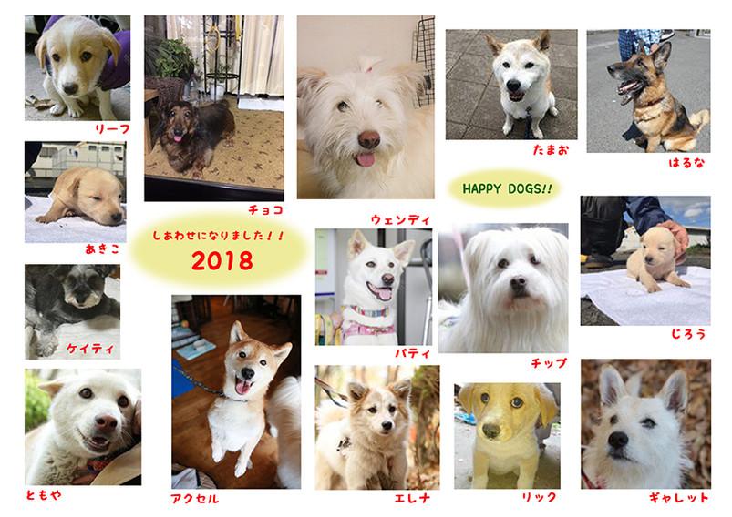 Thankyou2018dog