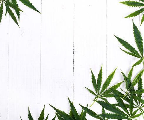 cannabis-leaf-plant-background_edited.jp