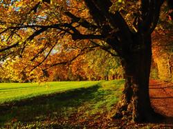 tree-779825_1920