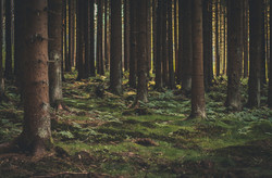 forest-1568788_1920