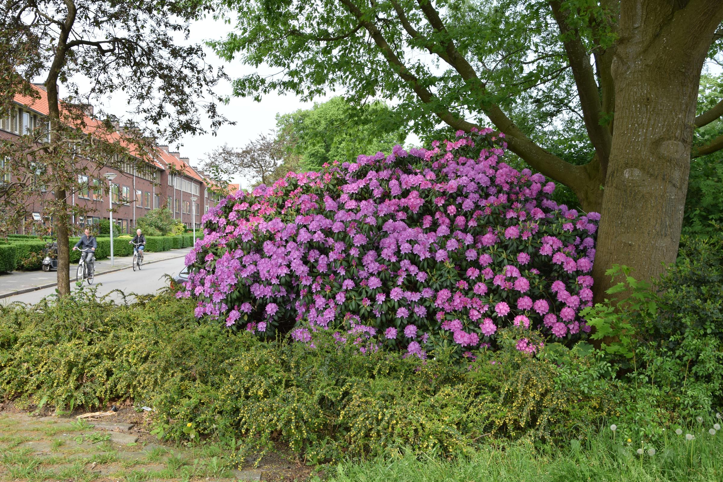 oosterpark_frans_geubel (98)