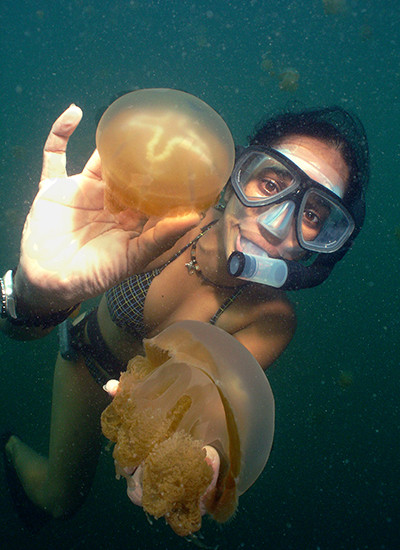 Getting Up Close With The Non-Stinging Jellyfish