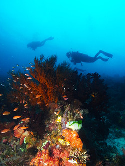 Underwater Lanscape