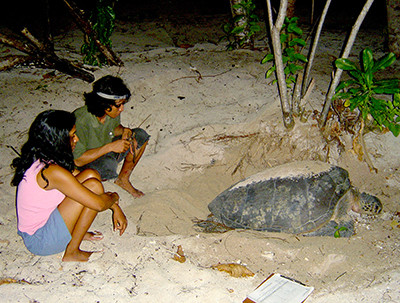 Observing The Turtle Laying Eggs