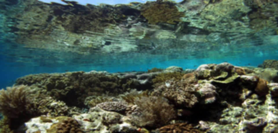 Coral Reef In The Shallows