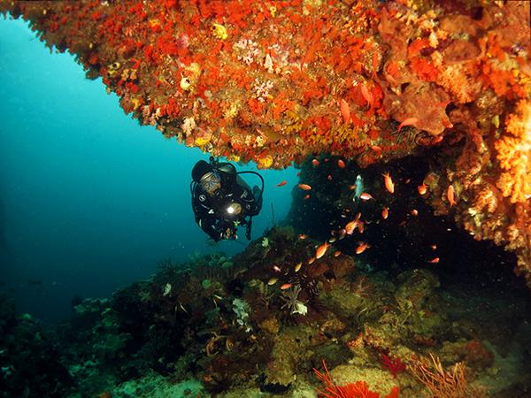 Dive Exploring Overhang