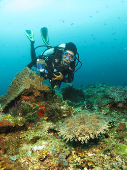 Diver with Wobeggong Shark