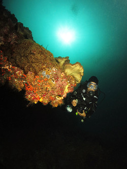 Underwater Scenery With Diver