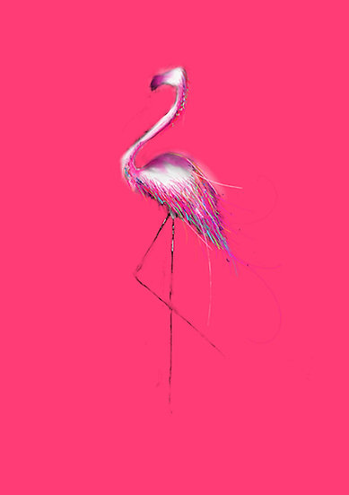 Flamingo // White