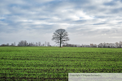 The field sown with winter crops