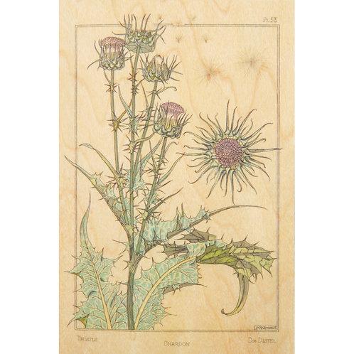 WOODHI - bnf fleurs chardon