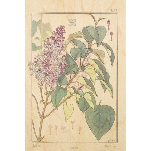 bnf fleurs lilas