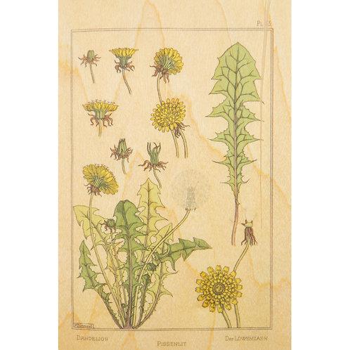 bnf fleurs pissenlit