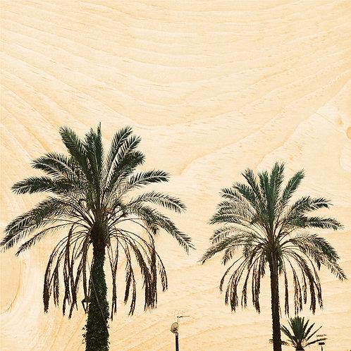45T palm