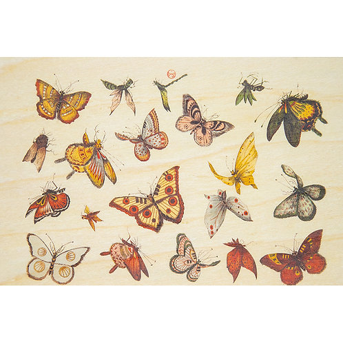 bnf papillons