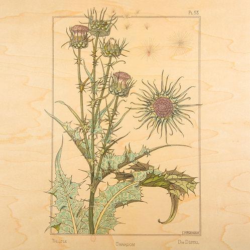 bnf fleurs chardon