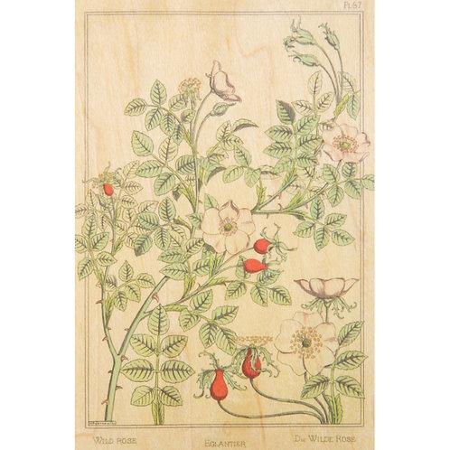 WOODHI - bnf fleurs églantier