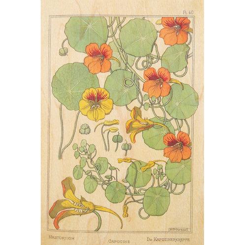 bnf fleurs capucine