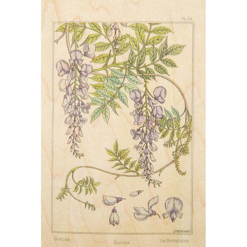WOODHI - bnf fleurs glycine