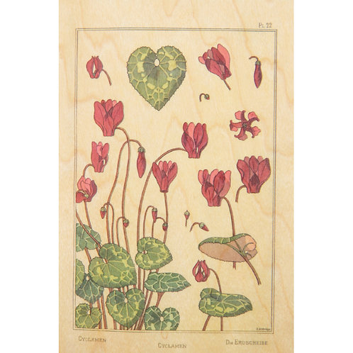 WOODHI - bnf fleurs cyclamen