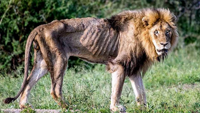 Sustainable Wildlife  Conservation