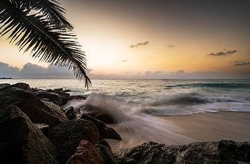 pineapple-social-media-palm-sunset.jpg