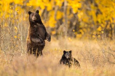 bynum_wildlife-3774.JPG