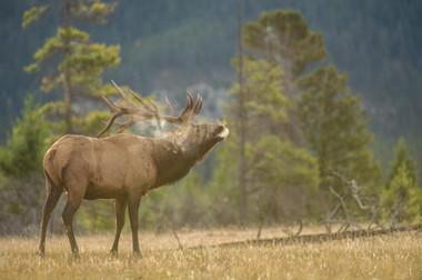 bynum_wildlife-8338.JPG
