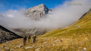 Alpine Ibex Saved by An Italian King