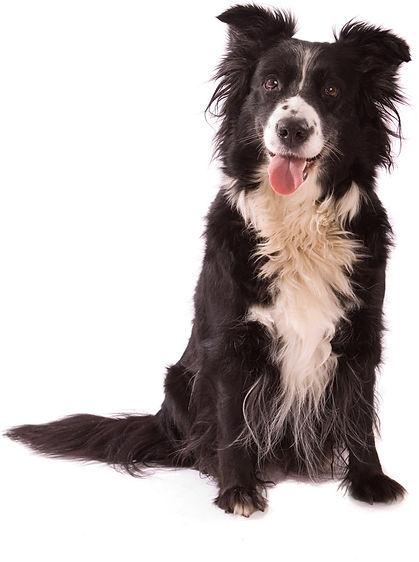 kelowna oh sit dog training, dog boarding, dog grooming, dog sitting, dog walking, doggie daycare, doggy daycare, westbank kelowna