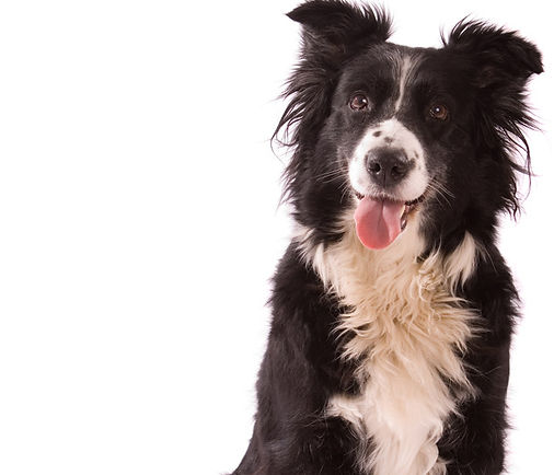 Enrollment puppy